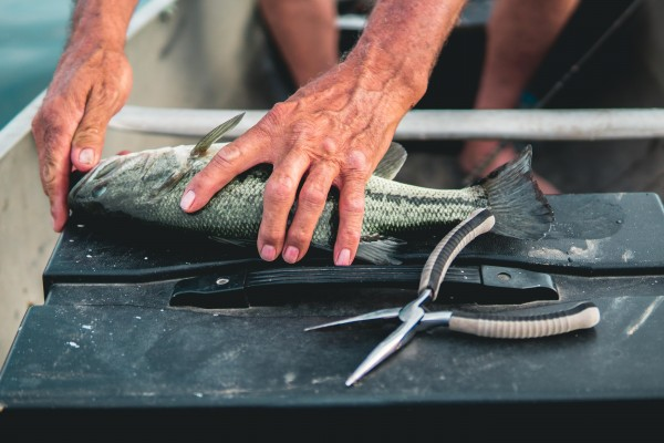 An in-depth review of the best needle nose pliers available in 2019.