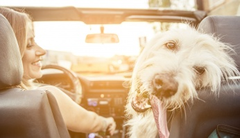 Dog Travel Trips: Going On A Long Car Trip With Your Furry Buddy